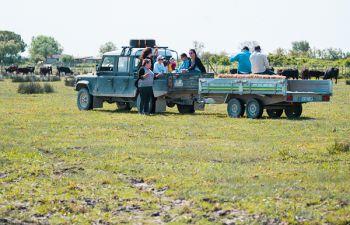 Visite d'une manade de taureaux en Camargue