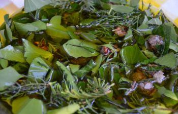 Récolte et transformation de plantes médicinales
