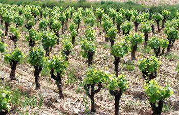 Découverte d'un Vignoble français de votre choix avec un oenologue