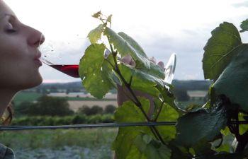 Visite d'un vignoble à Saumur et dégustation des vins de Val de Loire