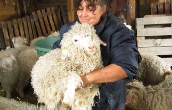 Atelier filage/feutrage de laine angora chez une éleveuse Dioise