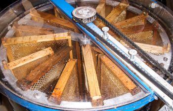 Découverte du miel avec un apiculteur provençal