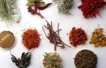 Initiation à la teinture végétale à base de plantes tinctoriales