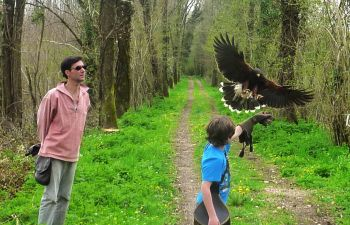 Stage  d'initiation à la fauconnerie au cœur de la Charente !
