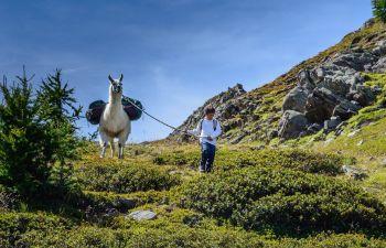 Randonnée avec les lamas dans les Hautes-Alpes