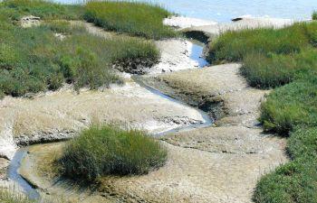 Promenade nature accompagnée à travers la Baie de Somme
