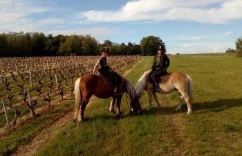 Balade équestre dans le Médoc, entre vigne et forêt