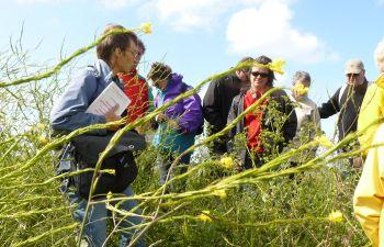 Journée plantes sauvages comestibles sur l'île d'Oléron !