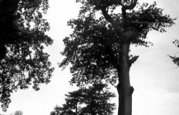 Atelier de tirage photo noir et blanc en laboratoire