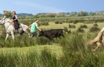 A la découverte d'un domaine Camarguais à cheval