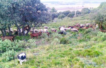 Immersion à la ferme : découverte du métier de chevrier