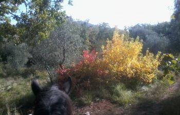 Balade à cheval en direction du Mont-Chauve, dans les hauteurs de Nice