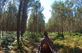 Promenade en calèche près de Soustons dans les landes