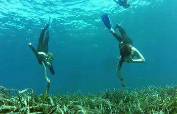 Découverte de la biologie sous-marine