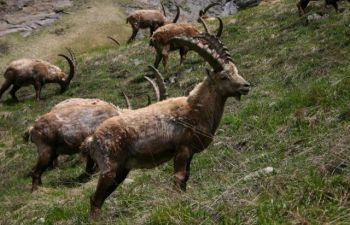 Balade dans le parc national de la Vanoise