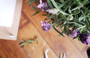 Atelier DIY : Fabriquez votre presse à fleurs à Paris