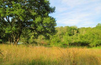 Découverte du Land'art en milieux naturels