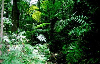 Bivouac 100 % forêt et découverte du Grand Cul de Sac Marin