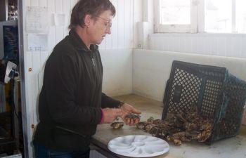 Visite d'une ferme ostréicole artisanale