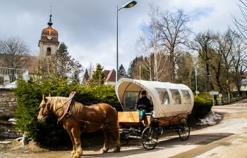 Promenade en calèche avec un cheval Comtois au coeur du Jura