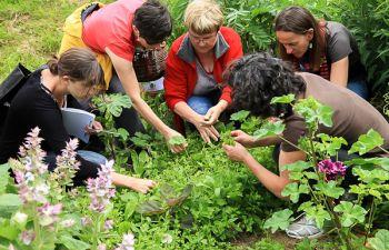 Balade à la découverte des plantes sauvages de Bretagne