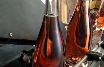 Visite et dégustation avec des producteurs de Champagne