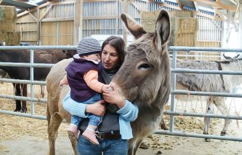 Découverte des ânes au sein d'une ferme pédagogique