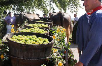 Atelier : accords mets régionaux et vins du Béarn