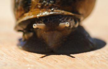 Passion escargots : visite d'un élevage en Haute Savoie