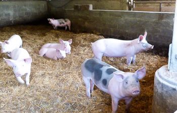 """Visite de notre élevage et dégustation de """"tapas de la ferme"""""""