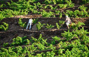 Escapade gourmande dans un vignoble à Banyuls sur Mer