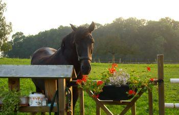 """Pique-Nique """"terroir"""" dans la campagne en vallée de la Marne"""