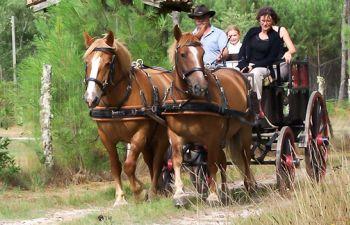 En calèche au cœur des Landes : découverte guidée au pas des chevaux